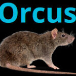 Orcus Rat Complete Tutorial || Orcus Rat Free Download